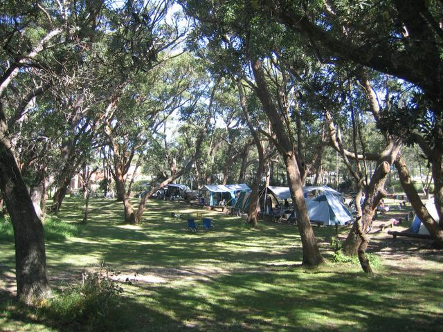 Kioloa Beach Holiday Park - Kioloa Beach: Area for tents and campers