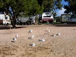 Streaky Bay Foreshore Tourist Park - Streaky Bay: Powered sites for caravans with water views